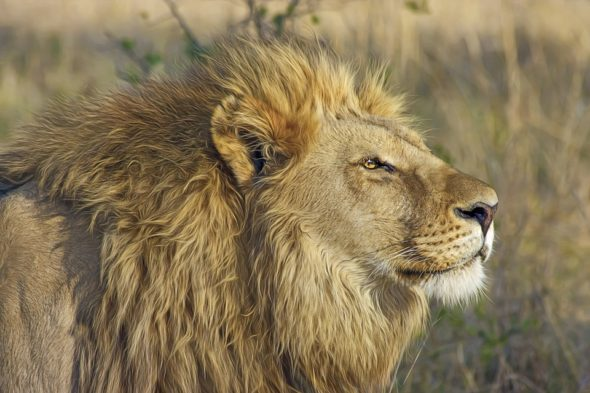 Exciting Safari Activities For The Perfect East Africa Adventure